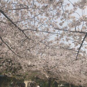 桜🌸   @サロンドボーテタカハシ(大田区)